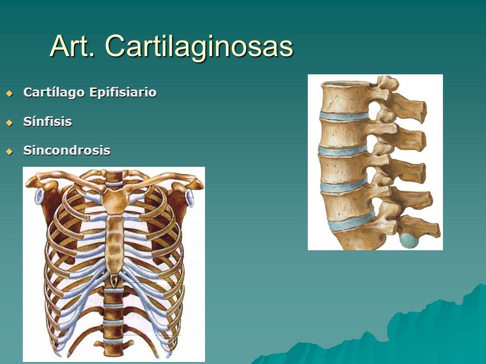 Art. Cartilaginosas Cartílago Epifisiario Sínfisis Sincondrosis