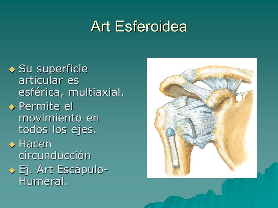 Art Esferoidea Su superficie articular es esférica, multiaxial.