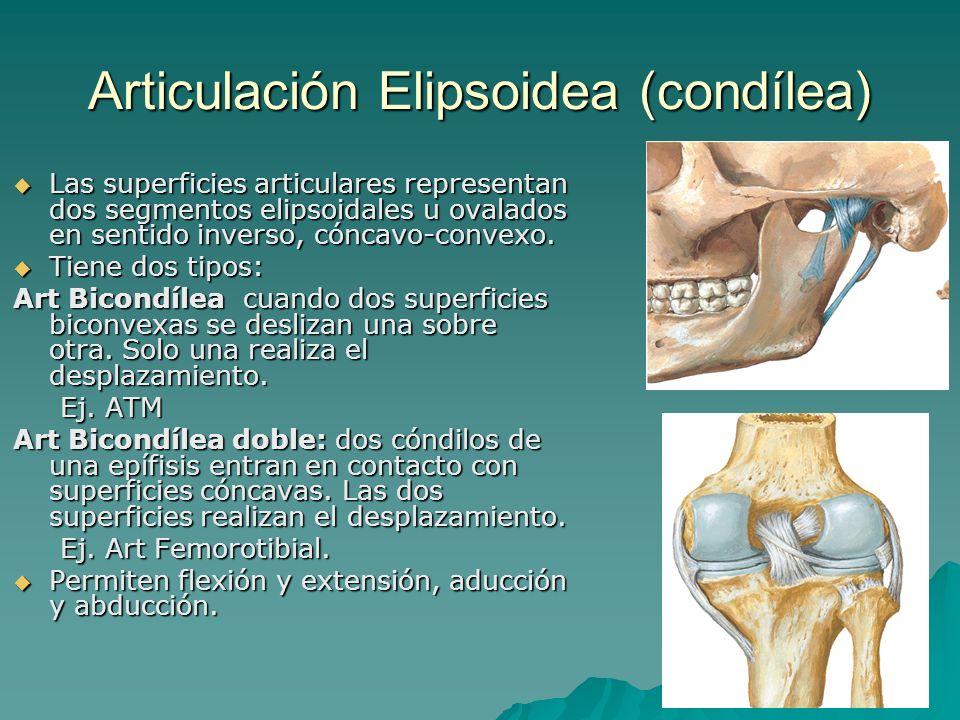 Lujoso Anatomía Articulación Femororrotuliana Festooning - Imágenes ...