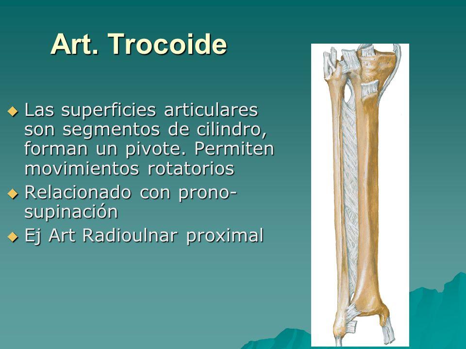 Art. TrocoideLas superficies articulares son segmentos de cilindro, forman un pivote. Permiten movimientos rotatorios.