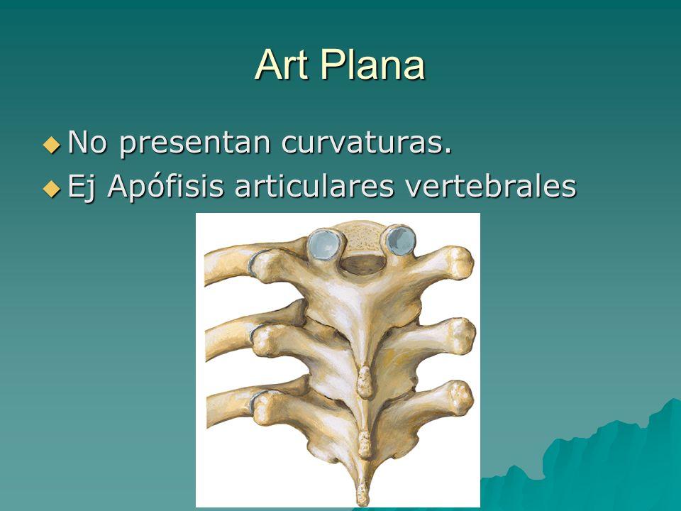 Art Plana No presentan curvaturas. Ej Apófisis articulares vertebrales