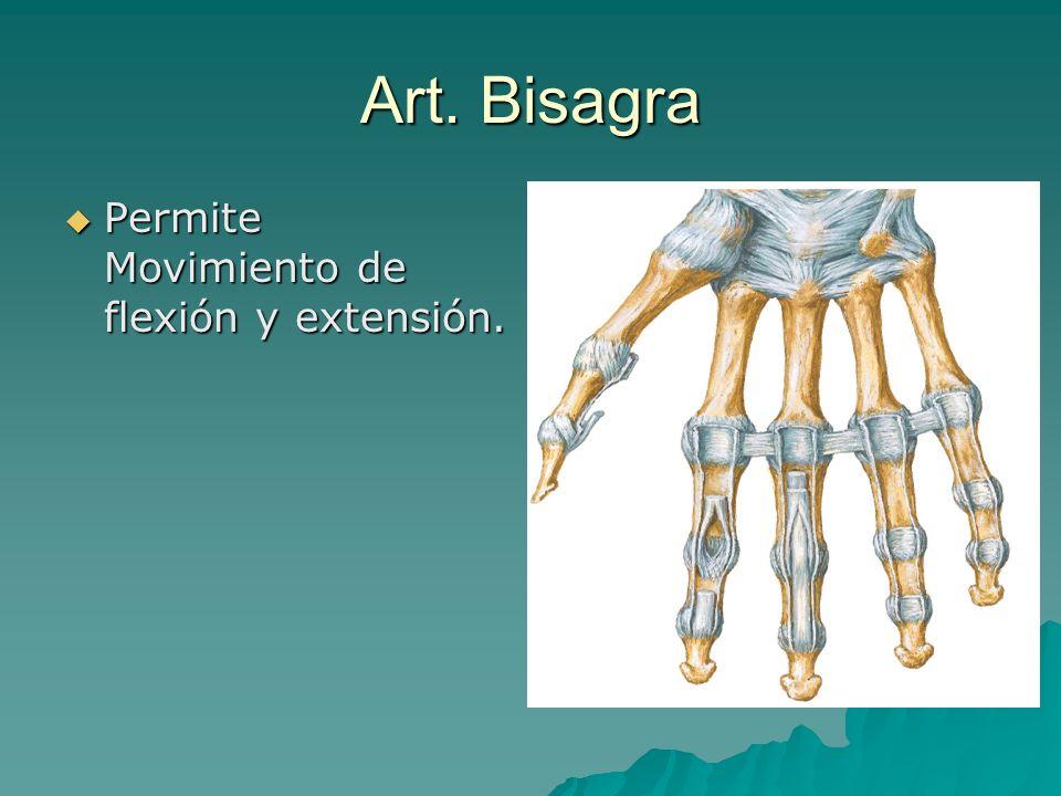 Art. Bisagra Permite Movimiento de flexión y extensión.