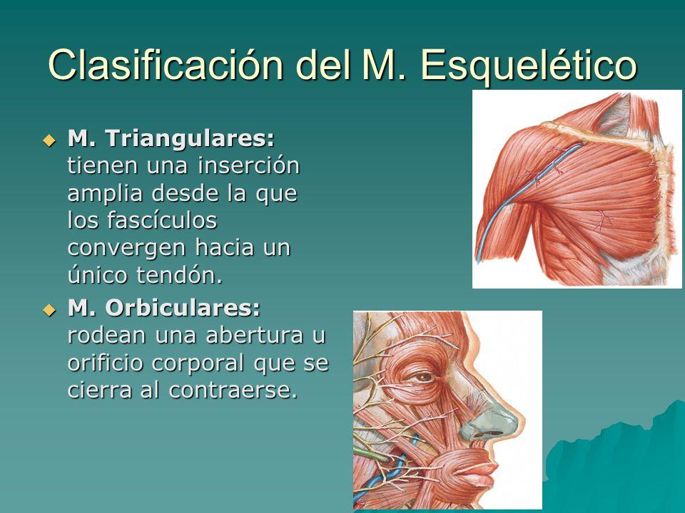 Clasificación del M. Esquelético