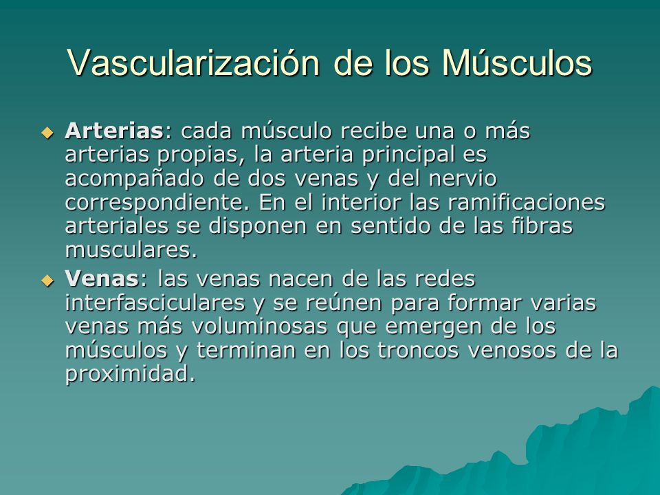 Vascularización de los Músculos