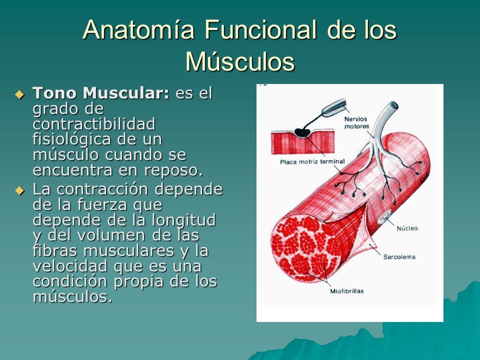 Anatomía Funcional de los Músculos