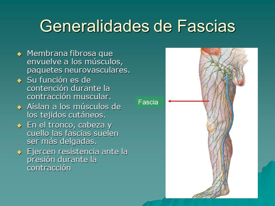 Generalidades de Fascias