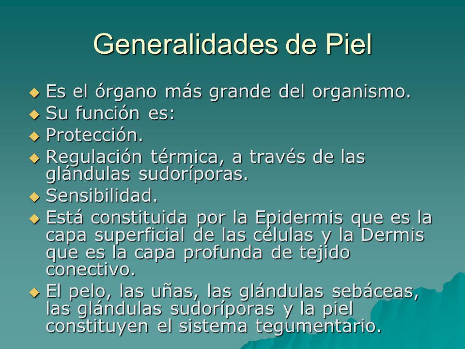 Generalidades de Piel Es el órgano más grande del organismo.