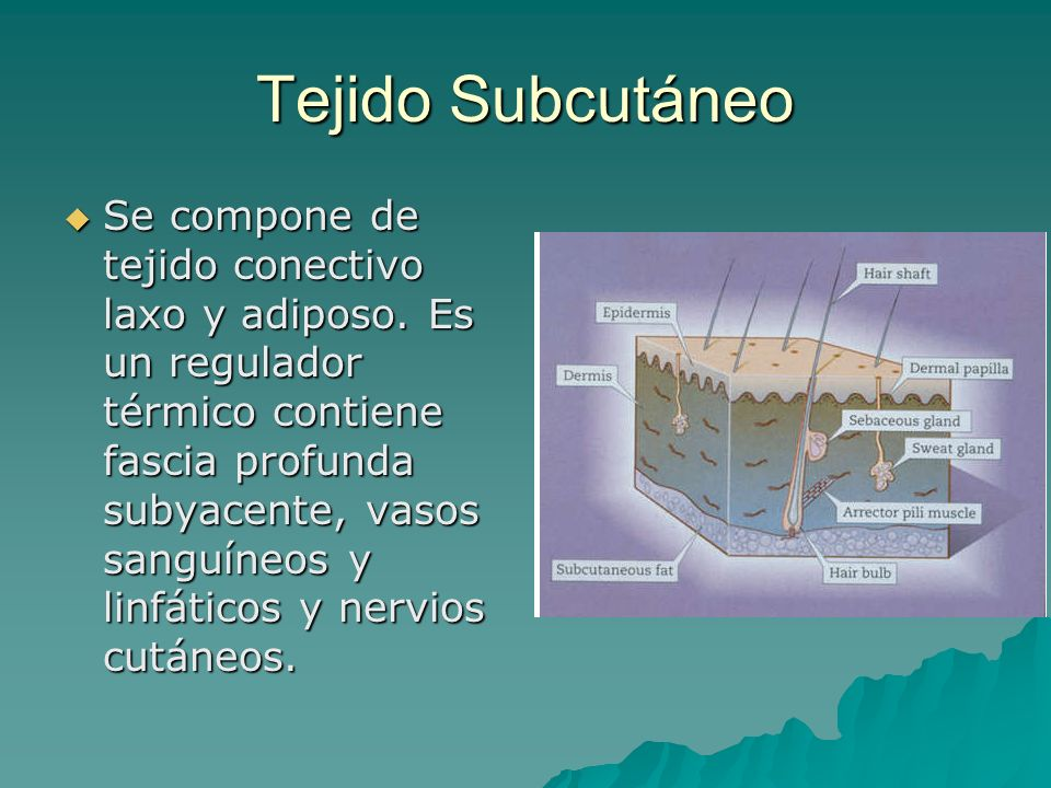 Tejido Subcutáneo