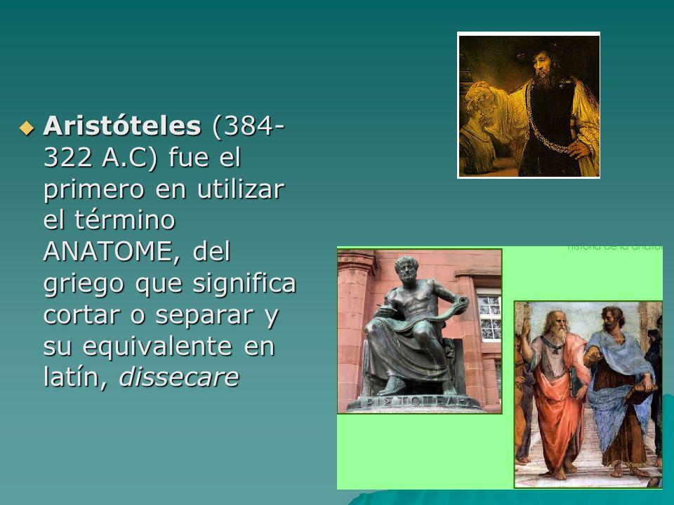 Aristóteles (384- 322 A.C) fue el primero en utilizar el término ANATOME, del griego que significa cortar o separar y su equivalente en latín, dissecare
