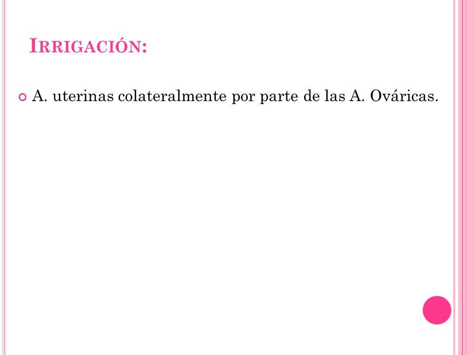 Irrigación: A. uterinas colateralmente por parte de las A. Ováricas.