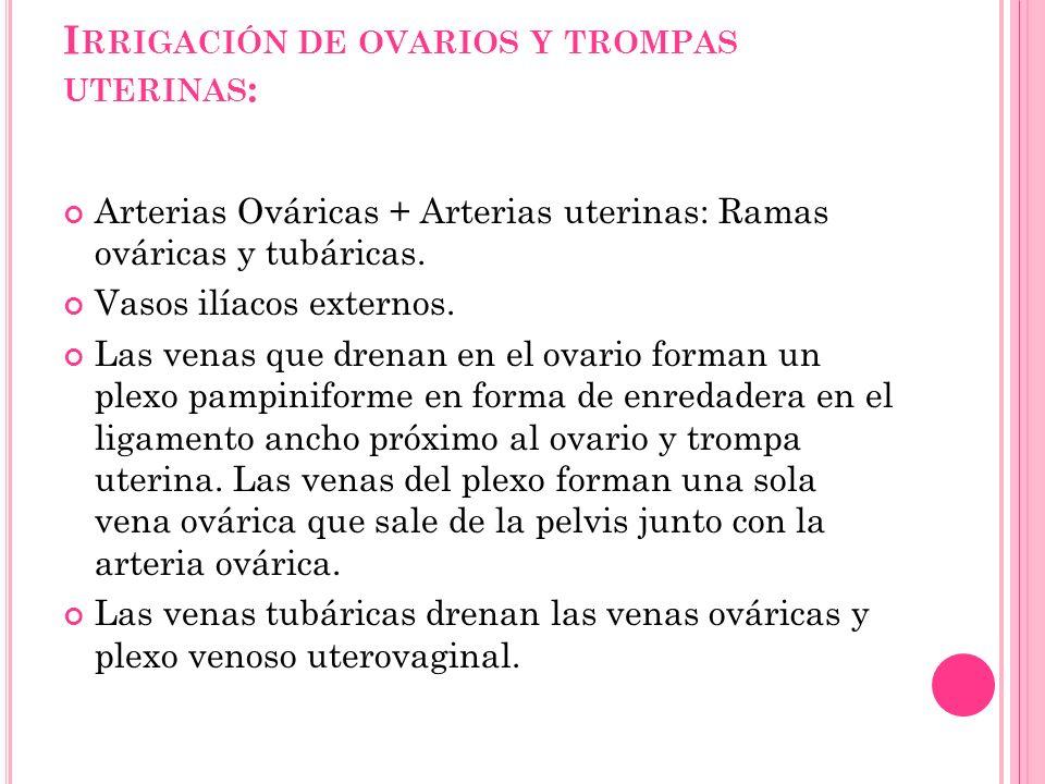 Irrigación de ovarios y trompas uterinas: