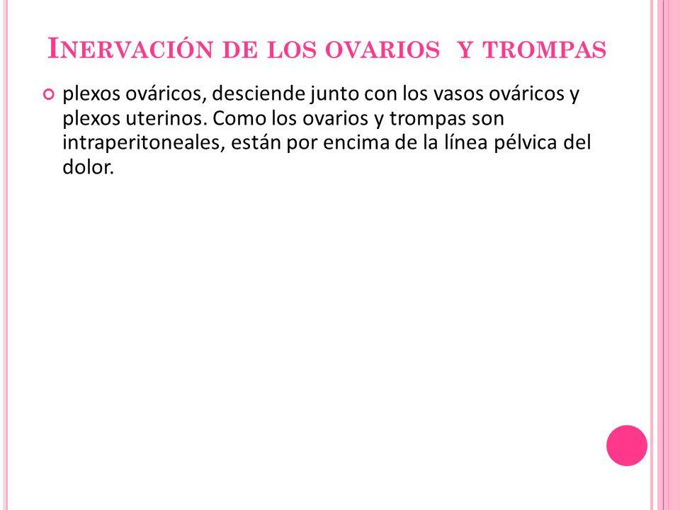 Inervación de los ovarios y trompas