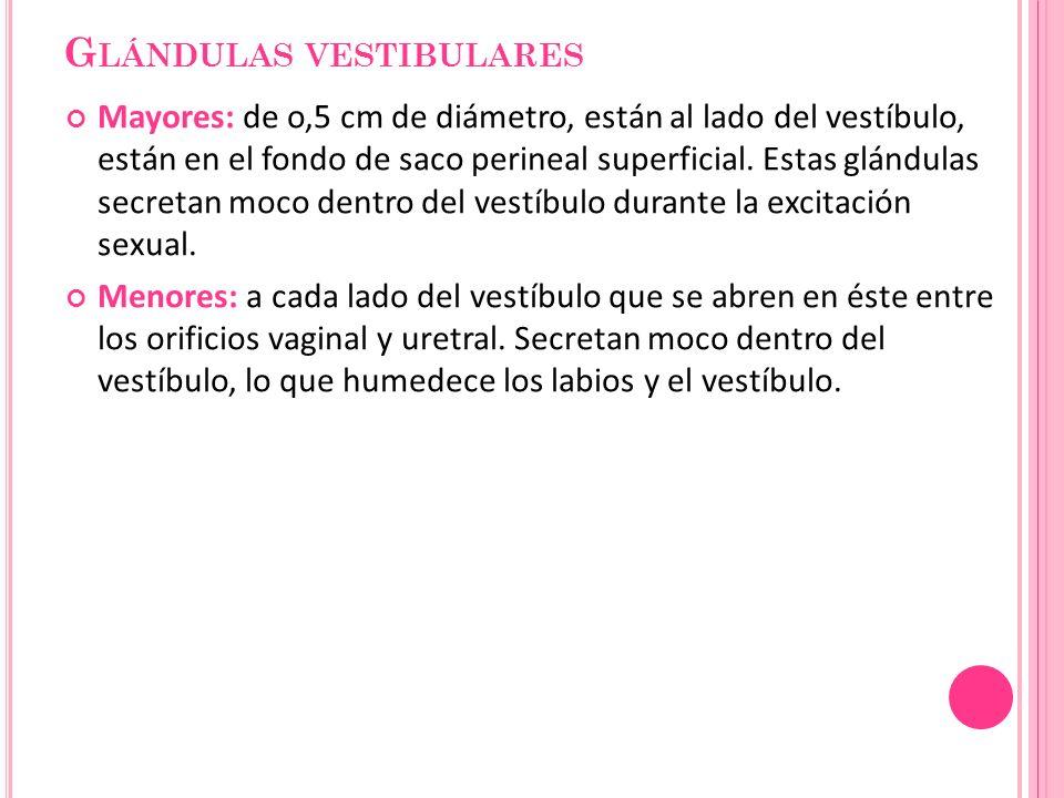 Glándulas vestibulares