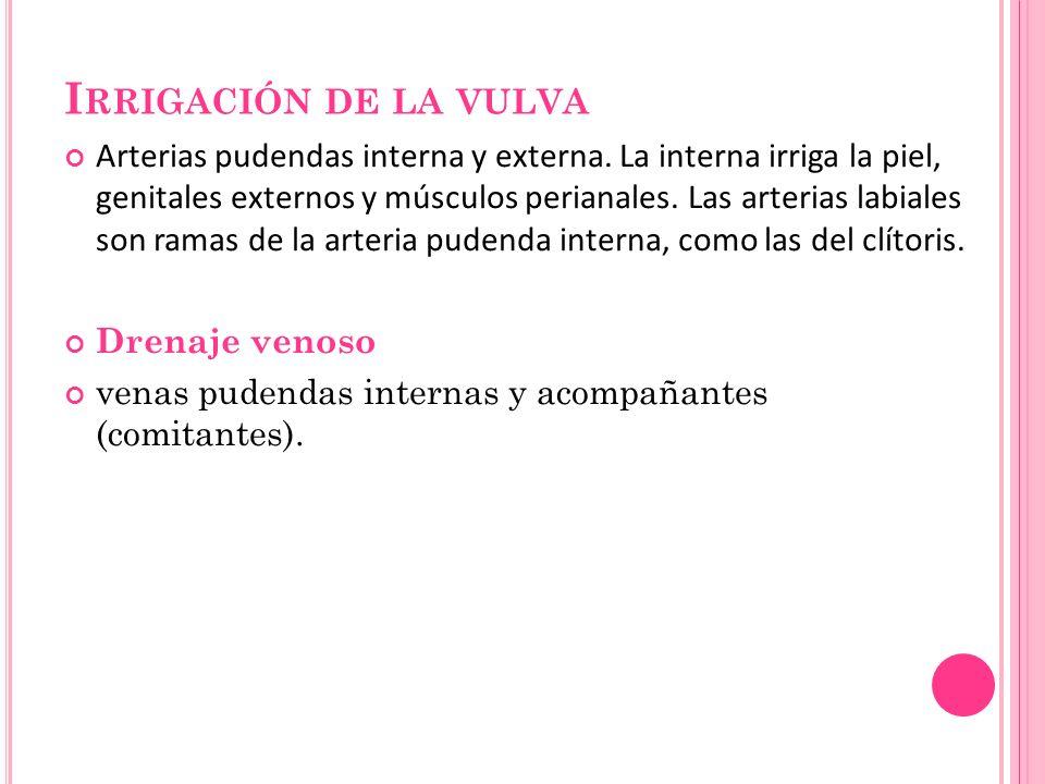 Irrigación de la vulva