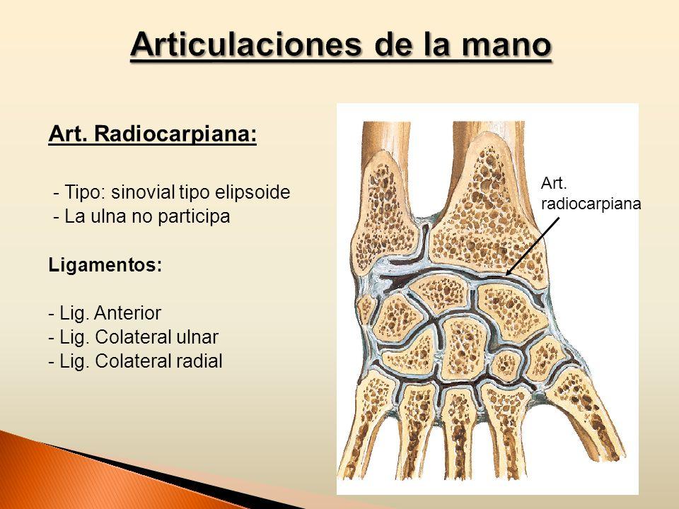 Articulaciones de la mano