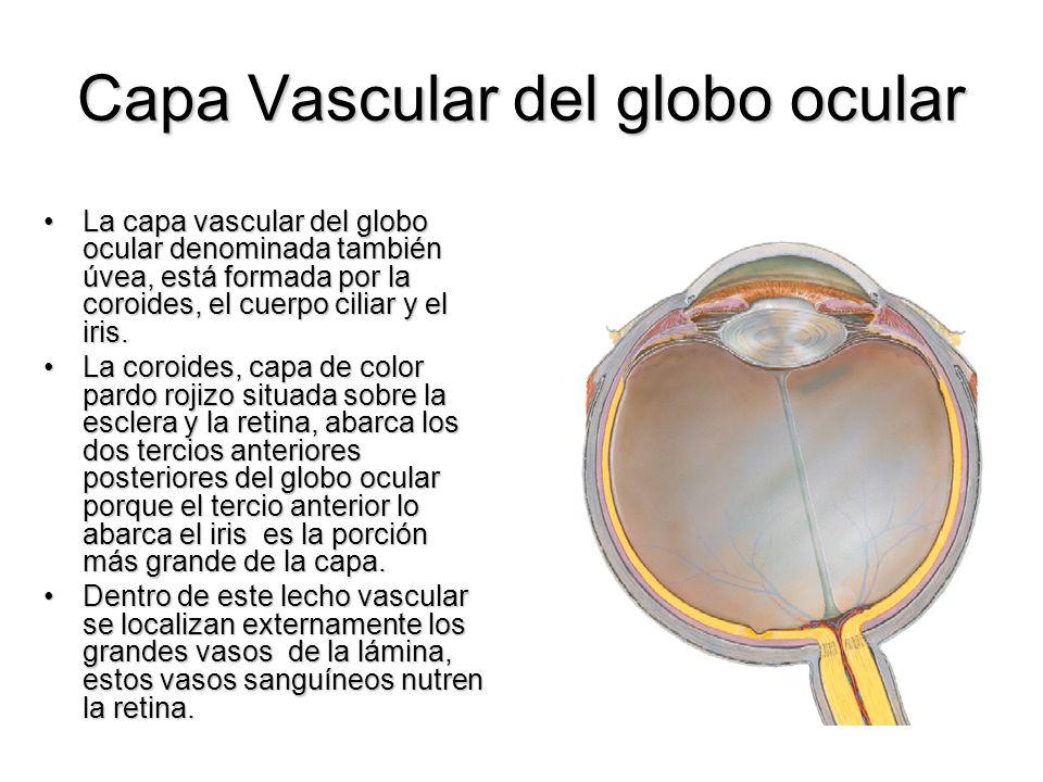 Capa Vascular del globo ocular