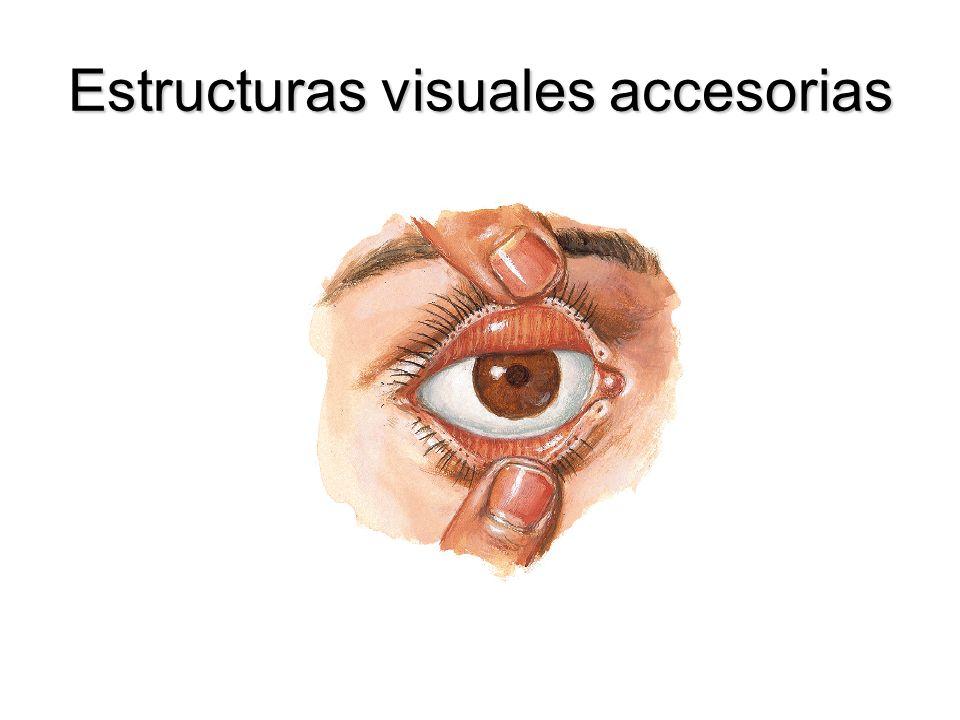 Estructuras visuales accesorias