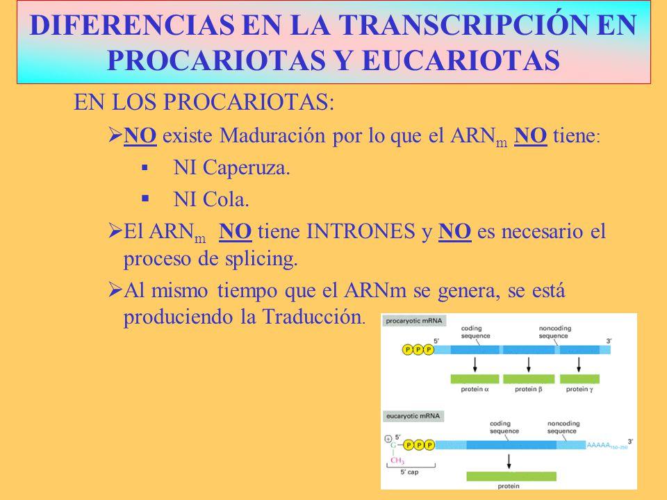 DIFERENCIAS EN LA TRANSCRIPCIÓN EN PROCARIOTAS Y EUCARIOTAS