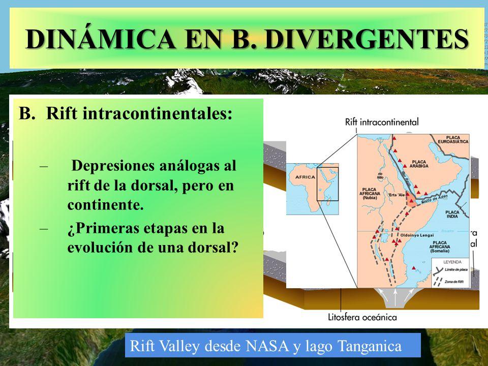 DINÁMICA EN B. DIVERGENTES