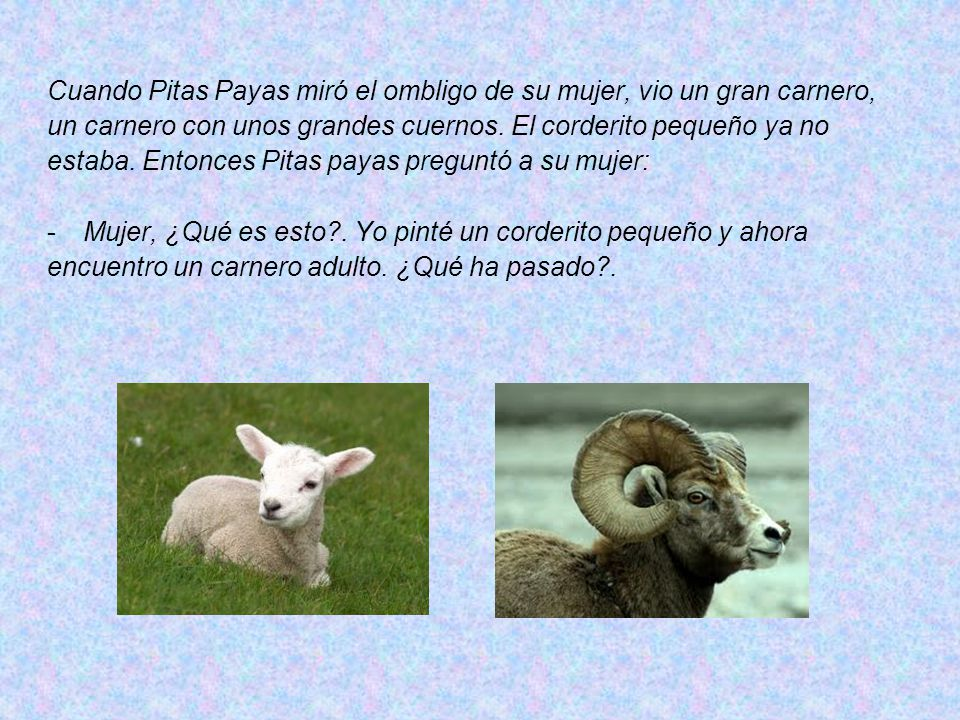 Cuando Pitas Payas miró el ombligo de su mujer, vio un gran carnero,