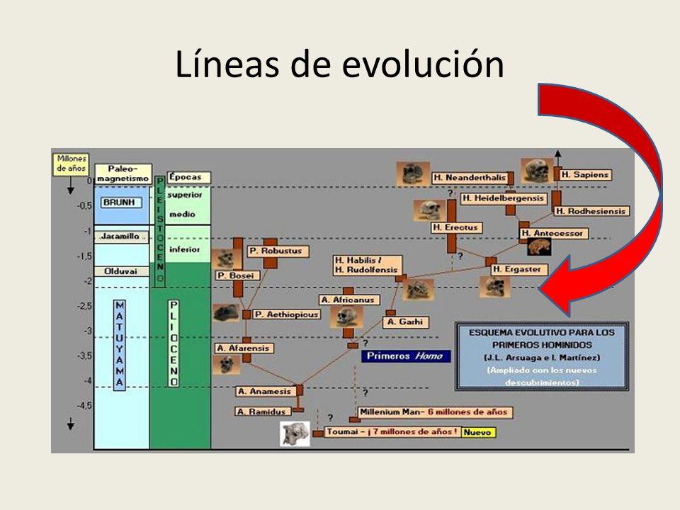 Líneas de evolución