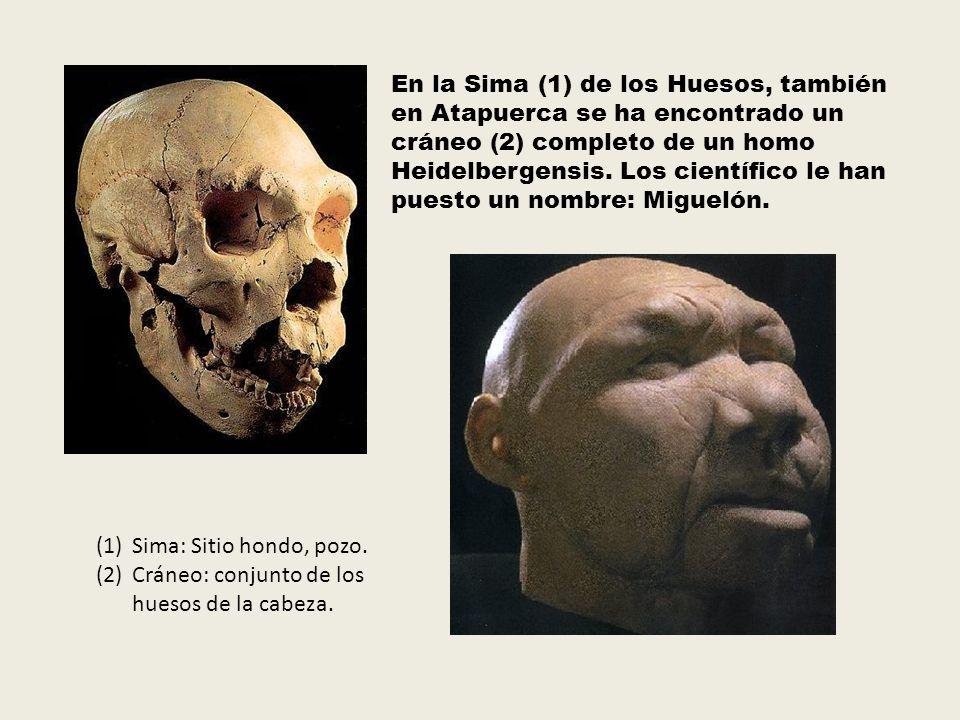 En la Sima (1) de los Huesos, también en Atapuerca se ha encontrado un cráneo (2) completo de un homo Heidelbergensis. Los científico le han puesto un nombre: Miguelón.