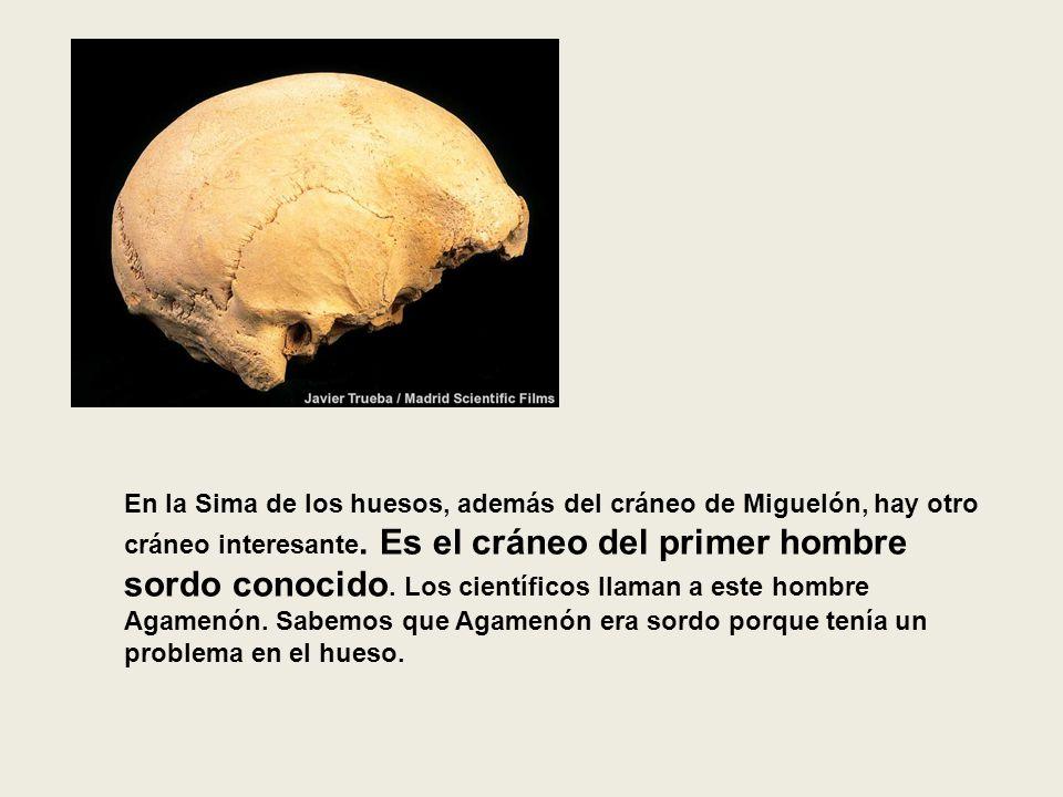 En la Sima de los huesos, además del cráneo de Miguelón, hay otro cráneo interesante.