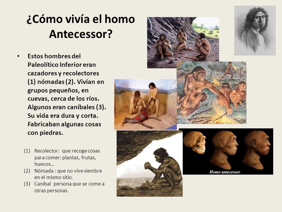 ¿Cómo vivía el homo Antecessor