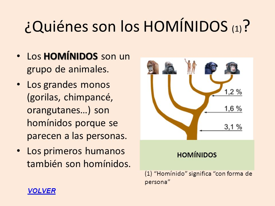 ¿Quiénes son los HOMÍNIDOS (1)