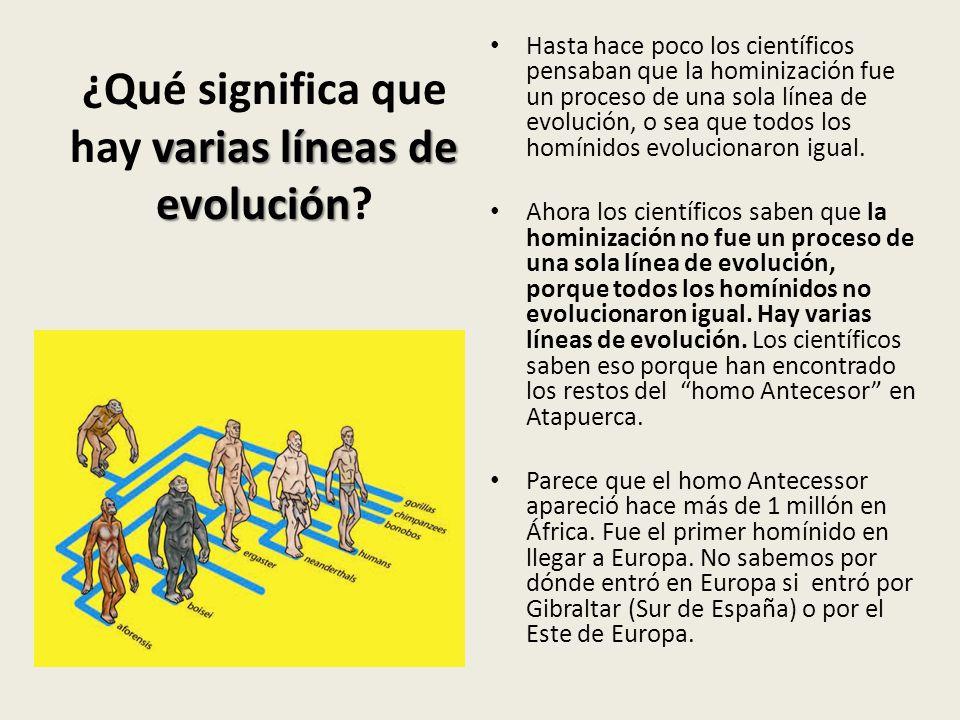 ¿Qué significa que hay varias líneas de evolución