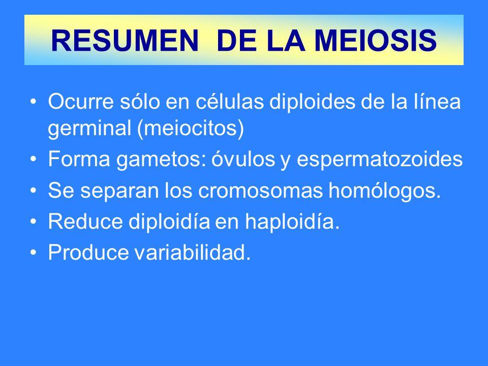 RESUMEN DE LA MEIOSIS Ocurre sólo en células diploides de la línea germinal (meiocitos) Forma gametos: óvulos y espermatozoides.