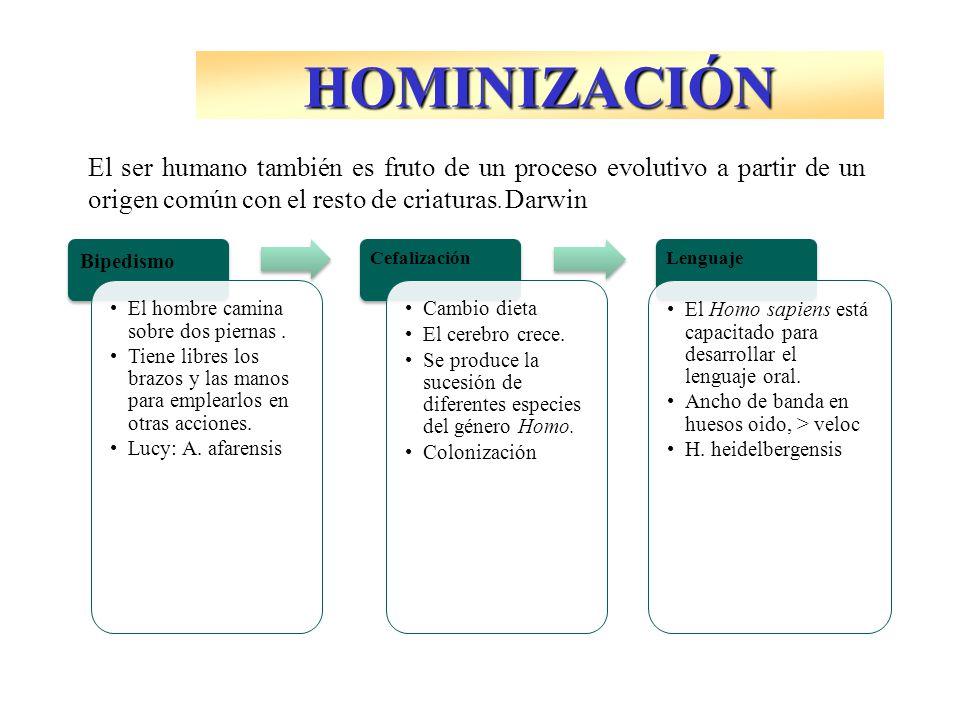 HOMINIZACIÓN El ser humano también es fruto de un proceso evolutivo a partir de un origen común con el resto de criaturas. Darwin.