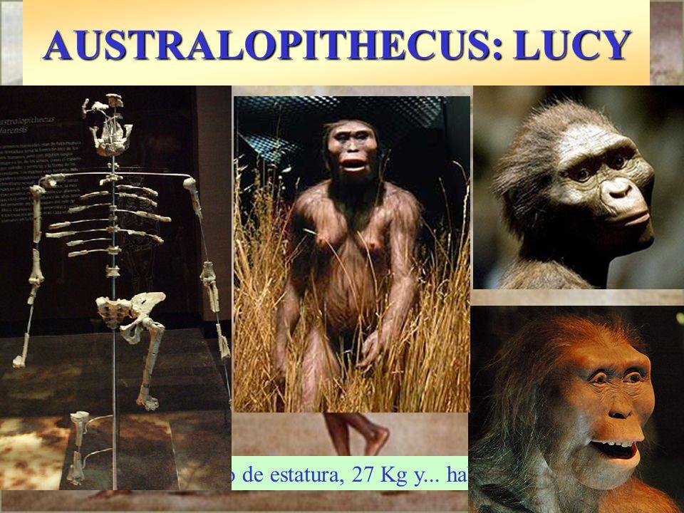 AUSTRALOPITHECUS: LUCY