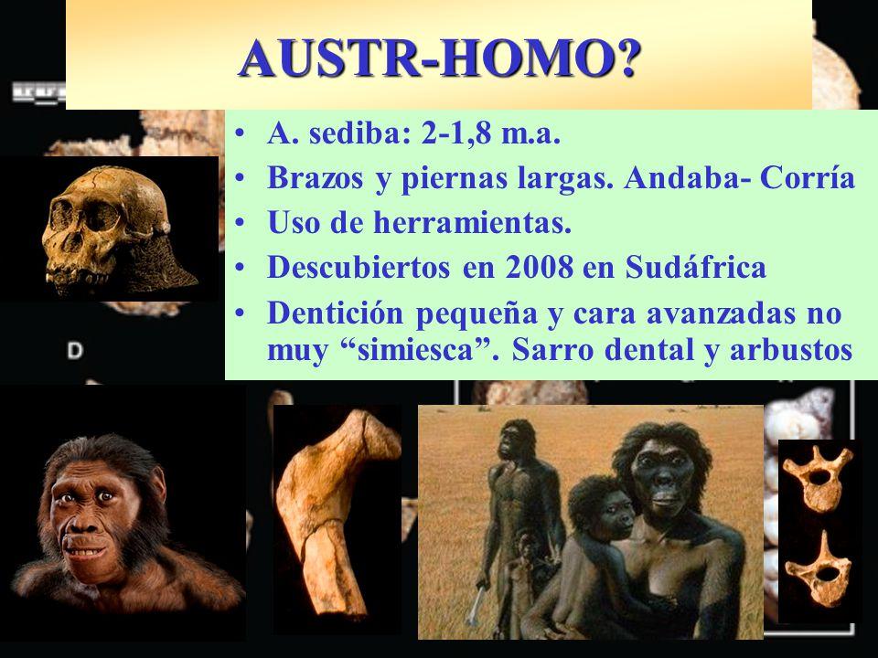 AUSTR-HOMO A. sediba: 2-1,8 m.a.