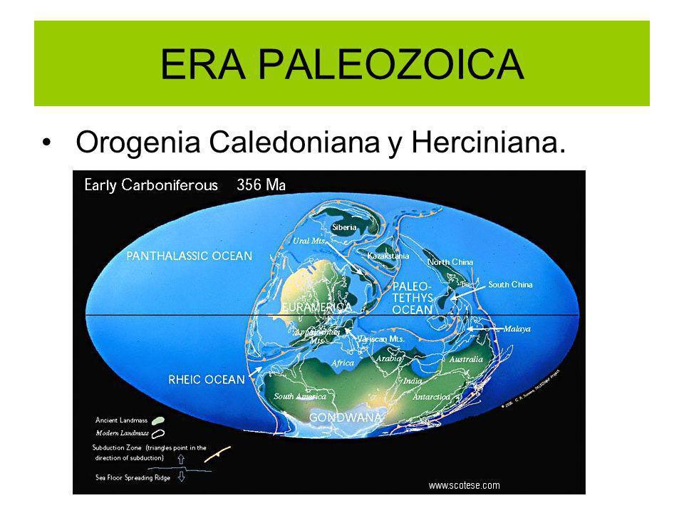 ERA PALEOZOICA Orogenia Caledoniana y Herciniana.