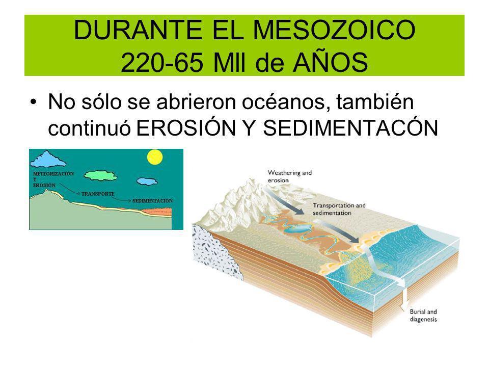 DURANTE EL MESOZOICO 220-65 Mll de AÑOS