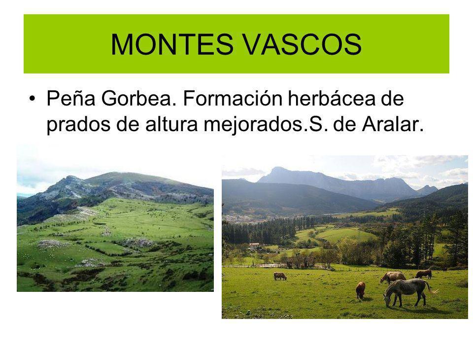 MONTES VASCOS Peña Gorbea. Formación herbácea de prados de altura mejorados.S. de Aralar.