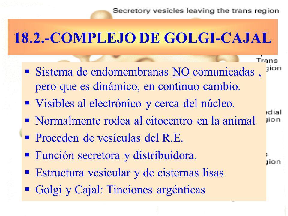 18.2.-COMPLEJO DE GOLGI-CAJAL