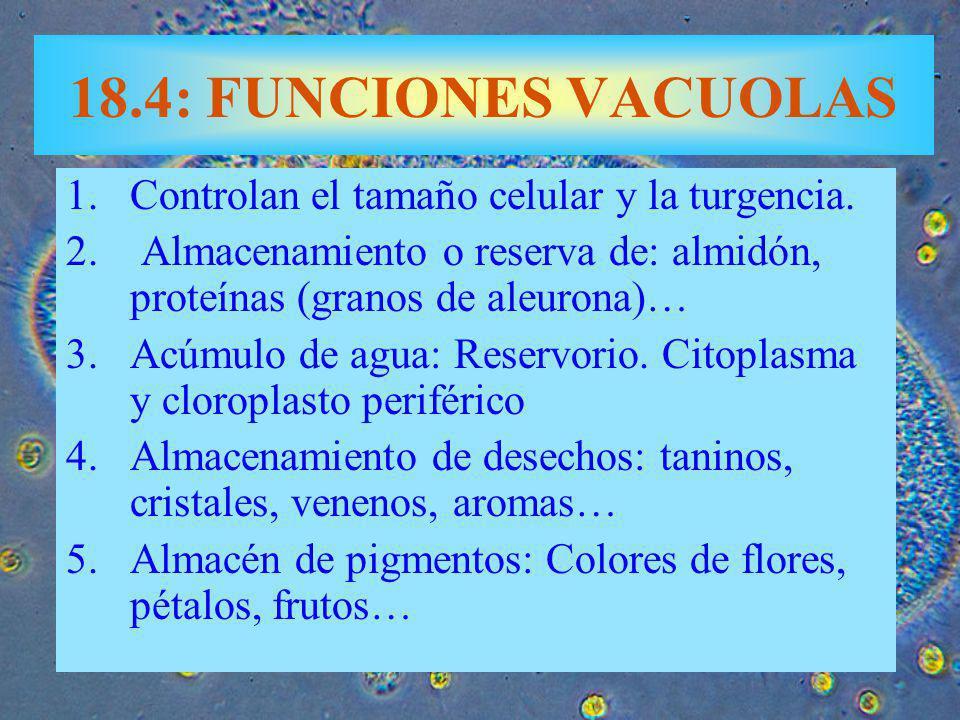 18.4: FUNCIONES VACUOLAS Controlan el tamaño celular y la turgencia.