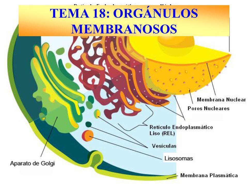 TEMA 18: ORGÁNULOS MEMBRANOSOS