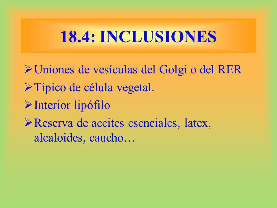 18.4: INCLUSIONES Uniones de vesículas del Golgi o del RER