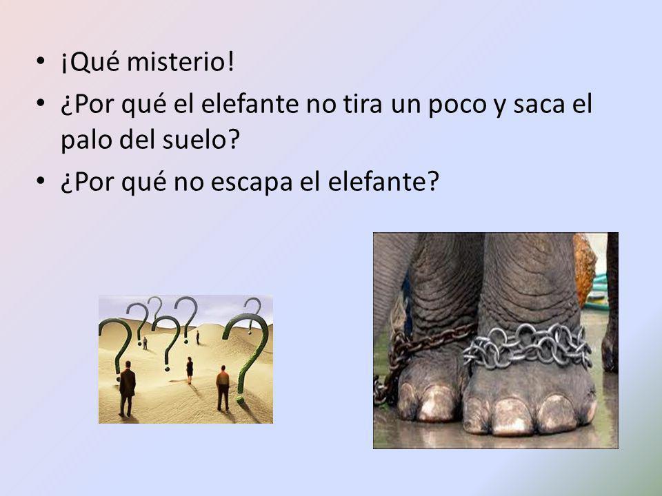 ¡Qué misterio. ¿Por qué el elefante no tira un poco y saca el palo del suelo.