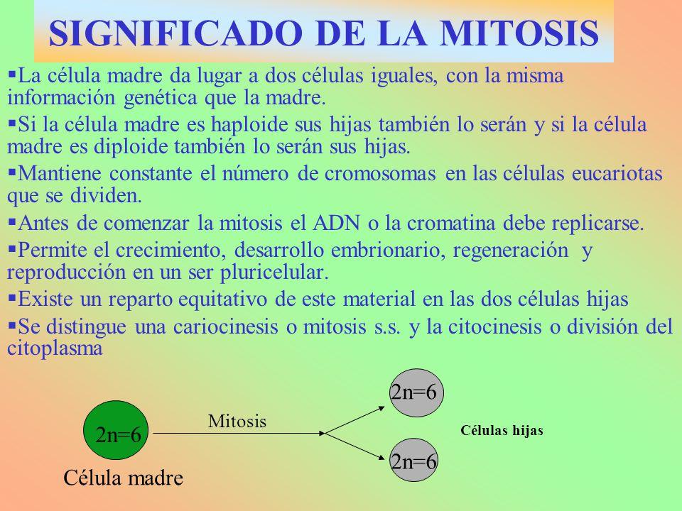 SIGNIFICADO DE LA MITOSIS