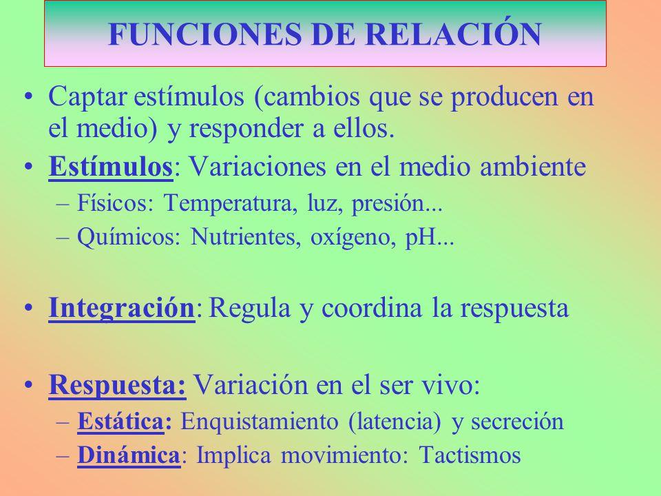 FUNCIONES DE RELACIÓN Captar estímulos (cambios que se producen en el medio) y responder a ellos. Estímulos: Variaciones en el medio ambiente.