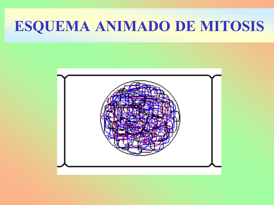 ESQUEMA ANIMADO DE MITOSIS