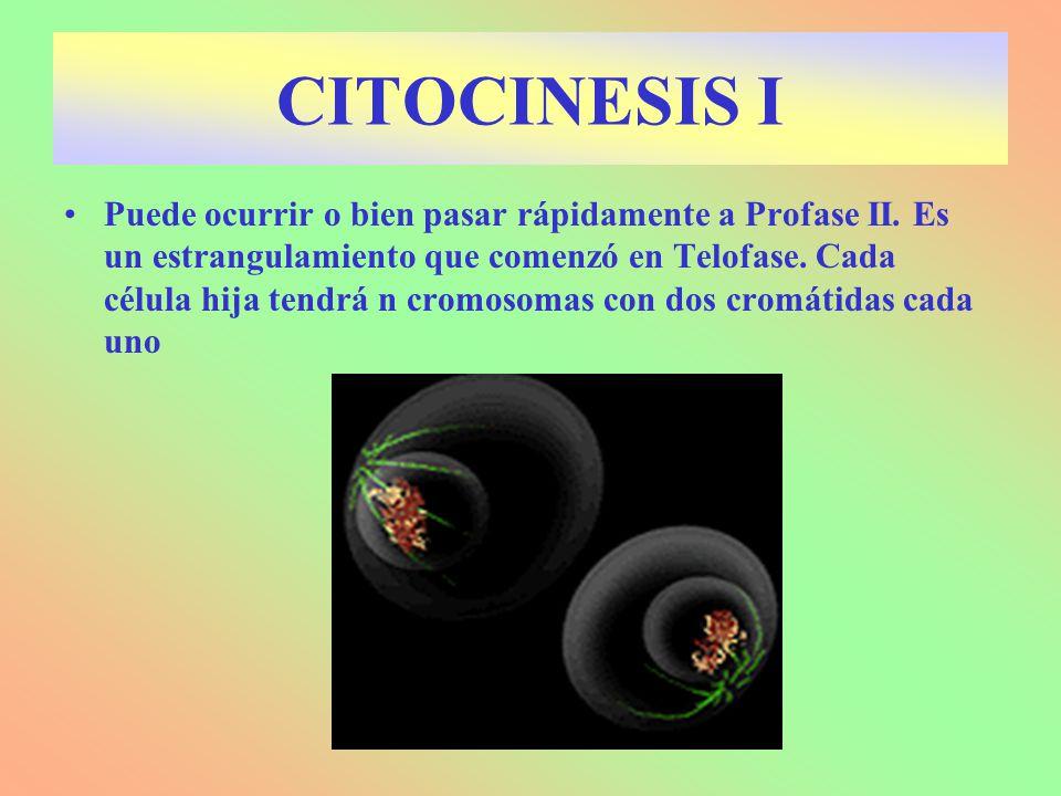 CITOCINESIS I