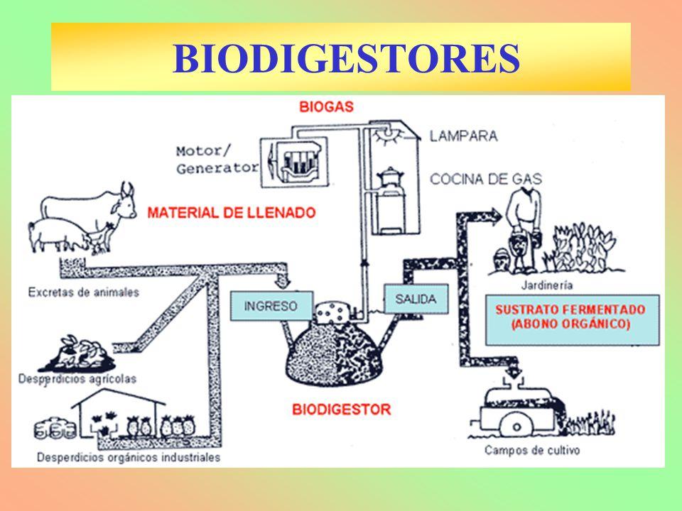 BIODIGESTORES