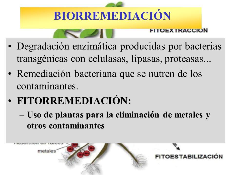 BIORREMEDIACIÓN Degradación enzimática producidas por bacterias transgénicas con celulasas, lipasas, proteasas...