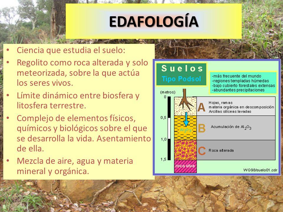 EDAFOLOGÍA Ciencia que estudia el suelo: