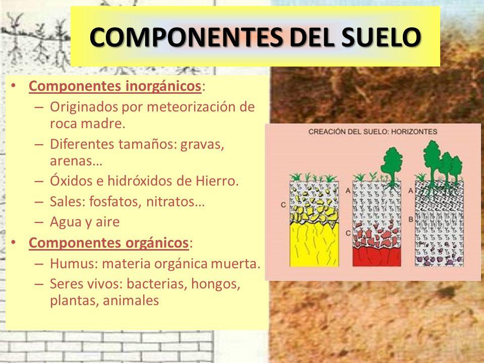 COMPONENTES DEL SUELO Componentes inorgánicos: Componentes orgánicos: